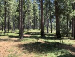 .95 Acre Sly Park Rd. Pollock Pines